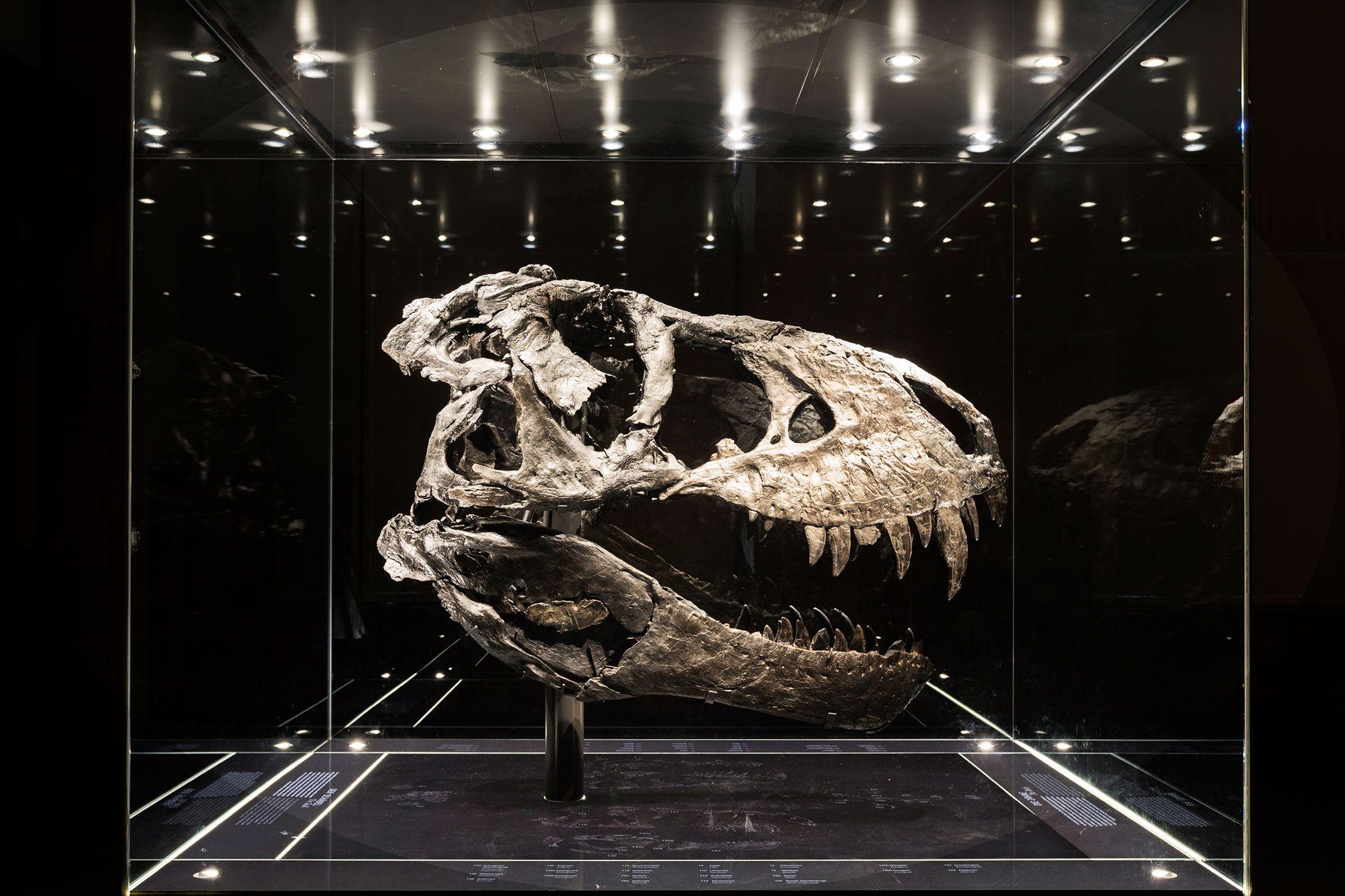23 Fotos De Fosseis Capturam O Misterio E A Beleza Dos Dinossauros