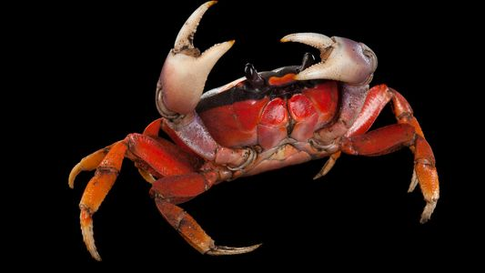 Estas espécies têm alguns dos nomes mais assustadores do reino animal. Saiba de onde eles vieram