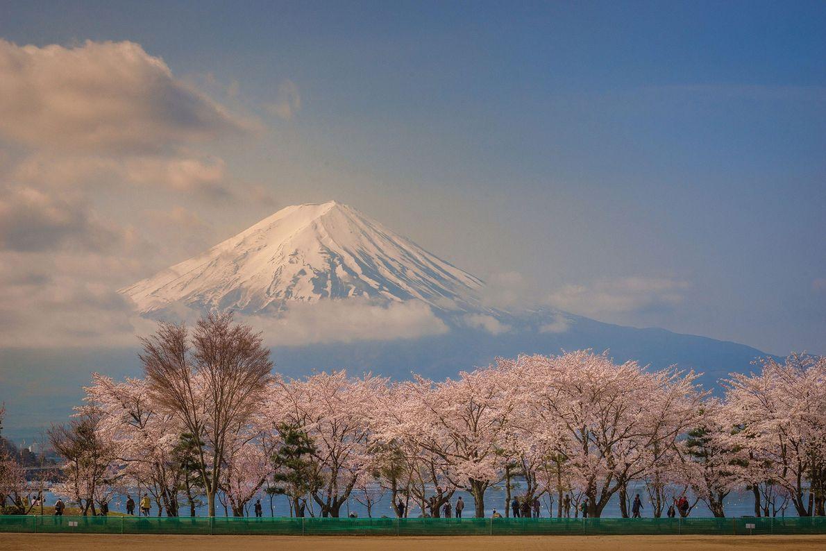 Rodeado de cerejeiras floridas e do sereno Lago Kawaguchiko, Dungo capturou a majestosa beleza do Monte ...