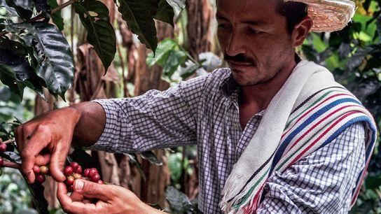 Don Fernando, agricultor em Caquetá, continuou a cultivar café mesmo vivendo numa região atingida por graves ...
