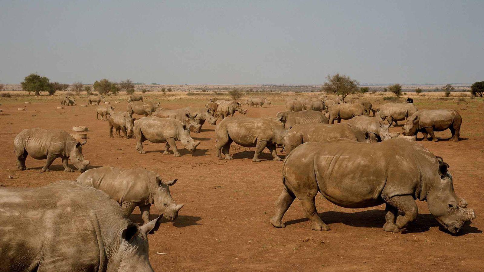 fazenda-de-rinocerontes
