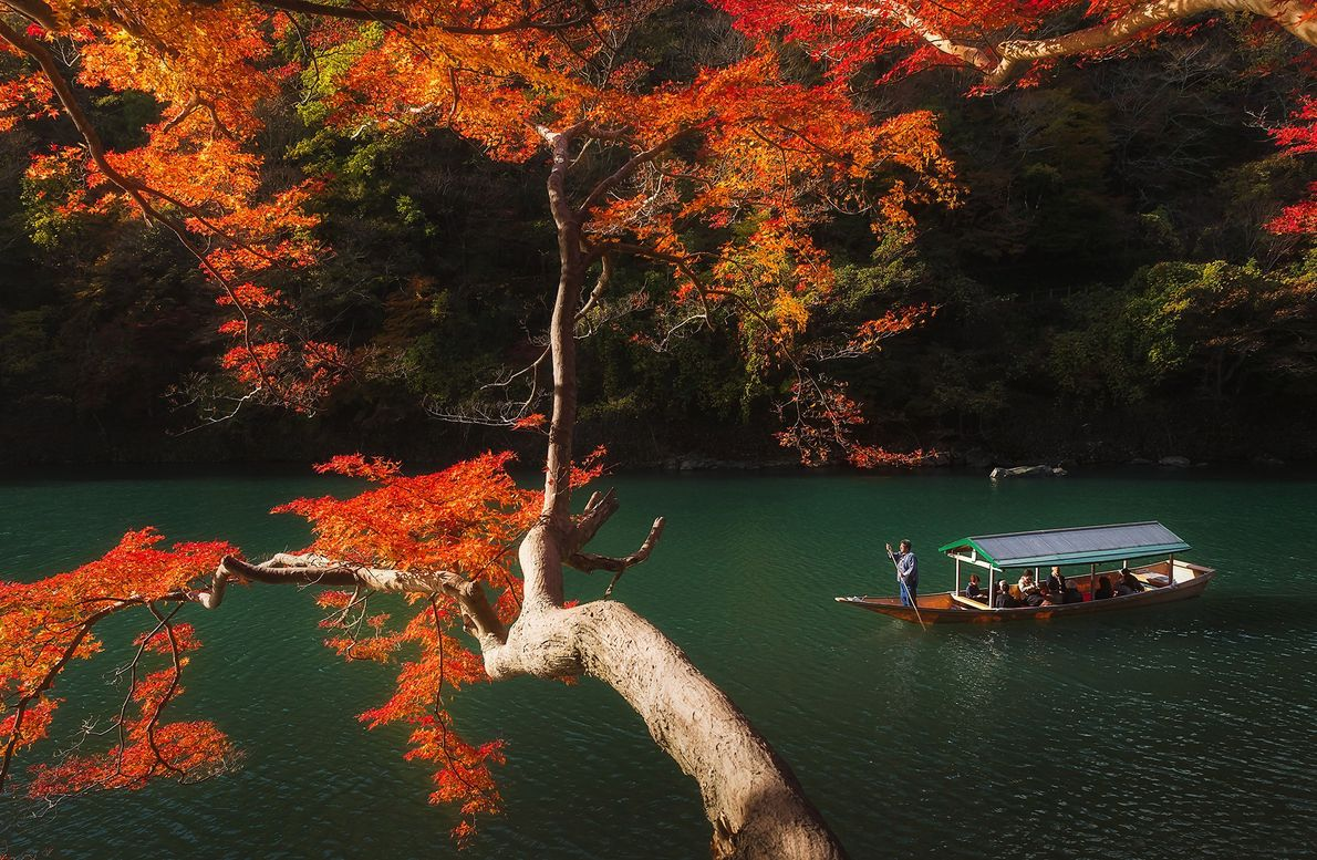 Aprecie as cores das folhas de outono em um passeio panorâmico pelo Rio Katsura em Arashiyama, ...