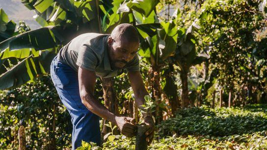 Zachariah Mukwinya, agricultor de Chavhanga, no distrito de Mutasa, observa que os agricultores locais hoje possuem ...