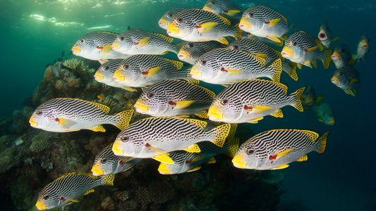 Em rara demonstração de solidariedade, 14 nações se comprometem a proteger oceanos