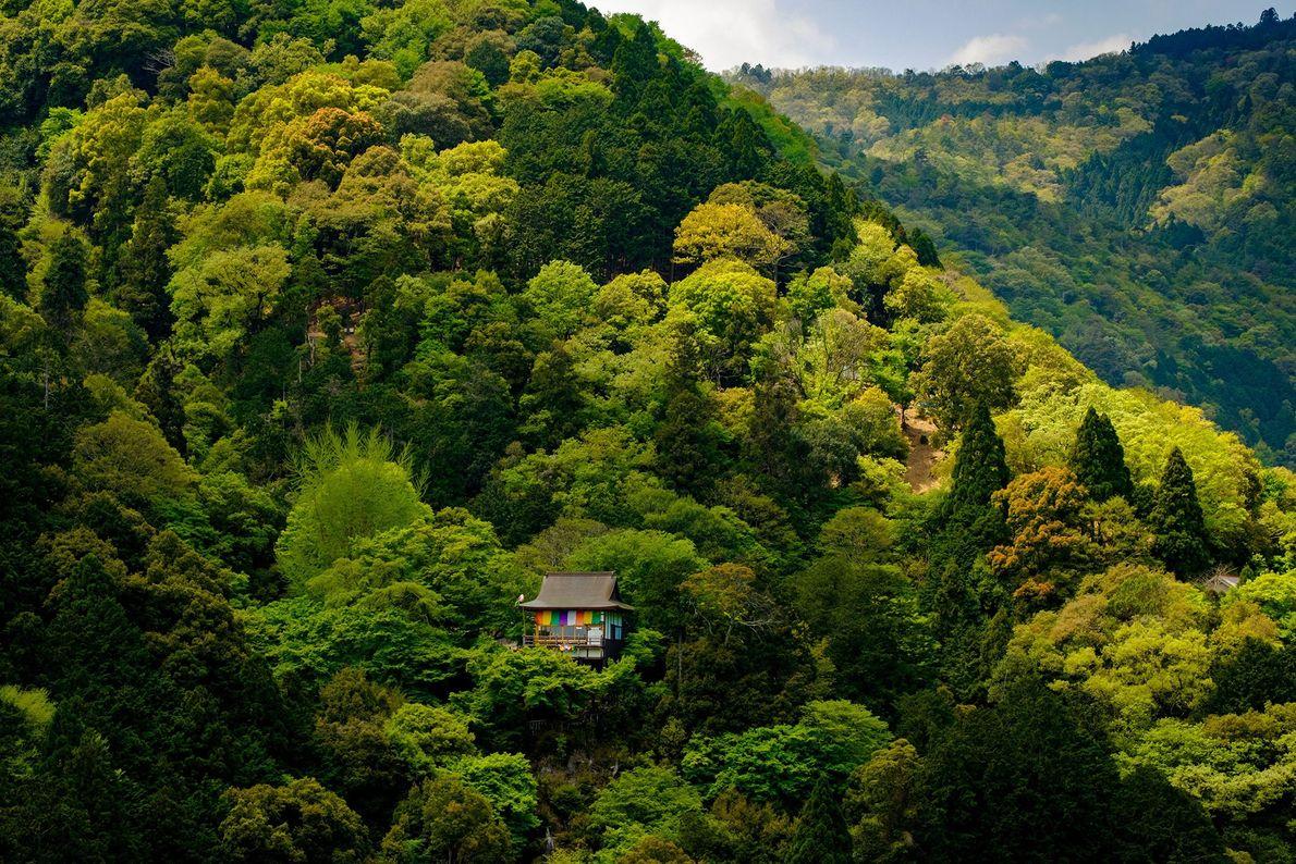 Um pequeno templo budista escondido nas montanhas arborizadas de Quioto. A goshiki-maku, cortina de cores vibrantes ...