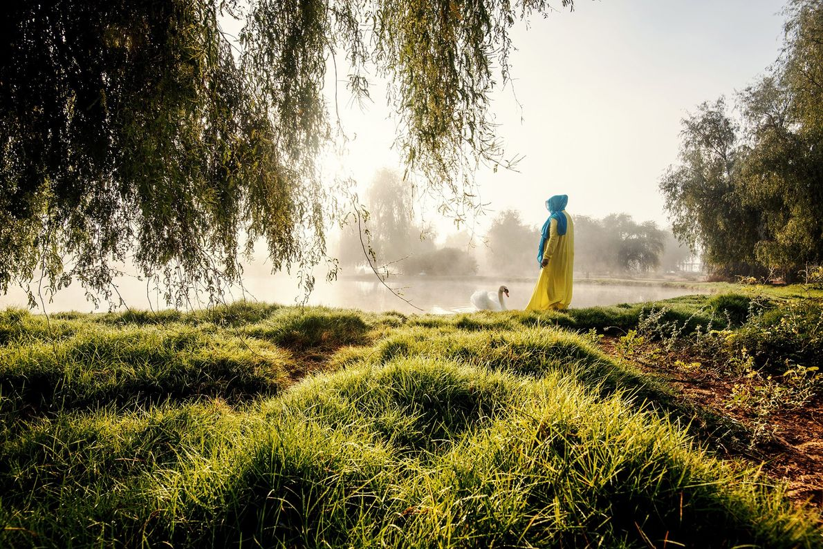 """""""Foi uma surpresa agradável testemunhar uma linda manhã nebulosa no deserto e esse cisne se aproximando ..."""