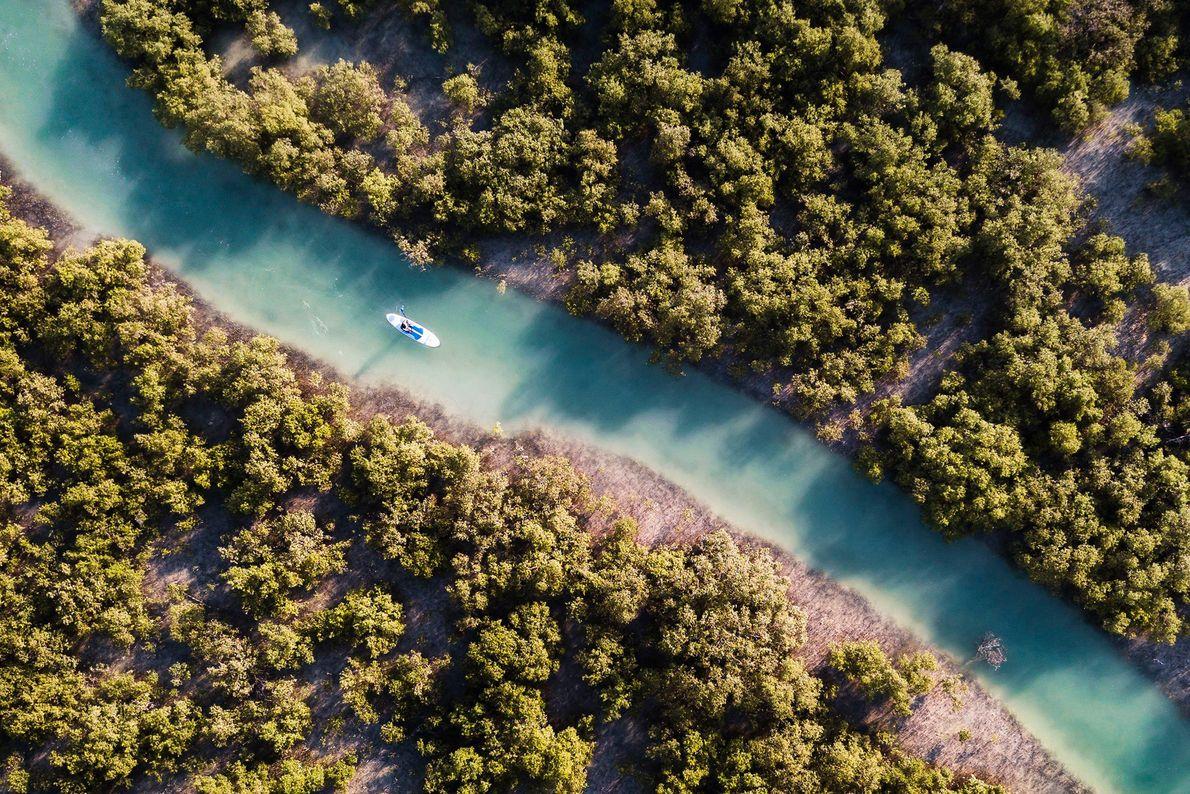 Um canoísta passeia em seu caiaque pelos canais formados entre os manguezais naturais de Abu Dhabi.