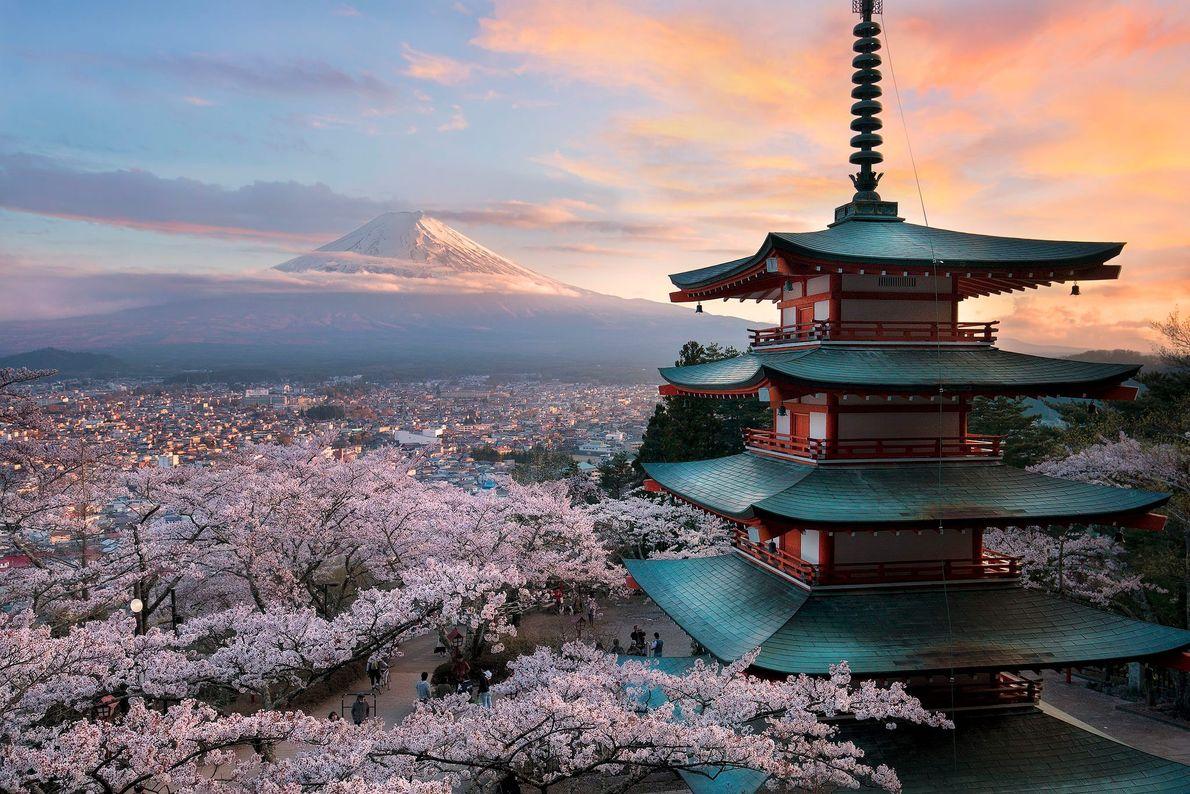 Usando as linhas fluídas do recém-construído Chureito Pagoda e as cerejeiras flutuantes para enquadrar o Monte ...