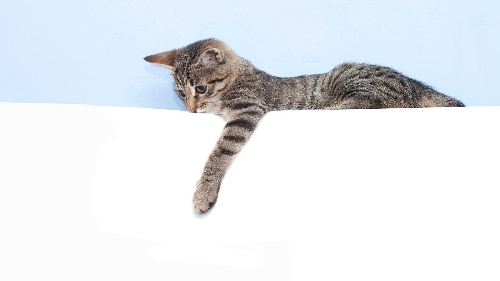 foto de gato malhado deitado