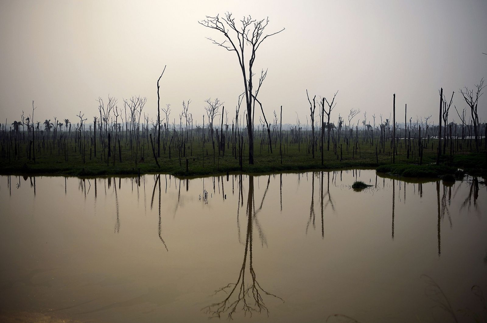 A Floresta Amazônica continua queimando, e especialistas temem que isso possa se espalhar e destruir o ...