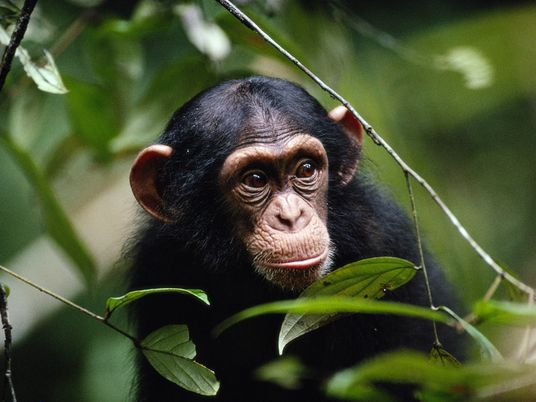 Animais selvagens também praticam distanciamento social para evitar adoecer