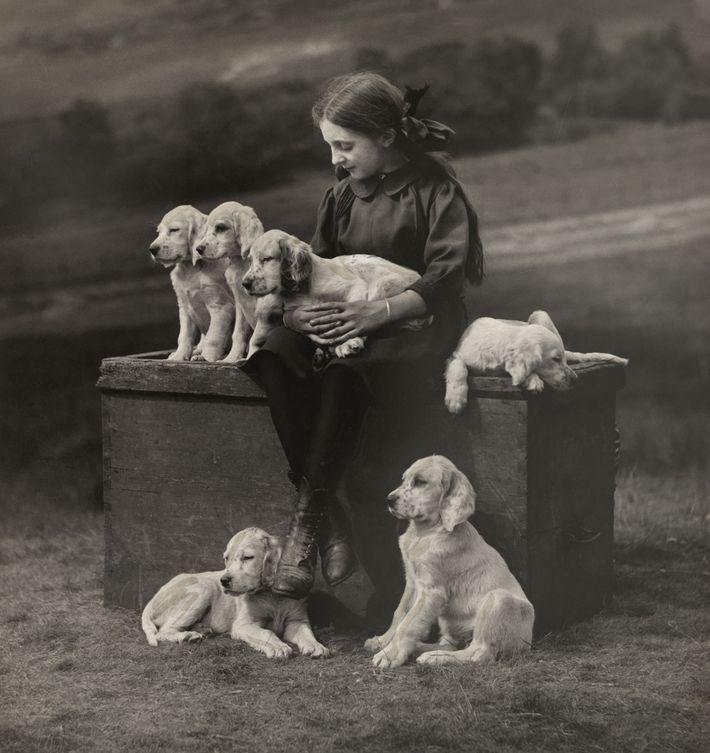 Filhotes de setter inglês sentam ao lado de uma menina escocesa.