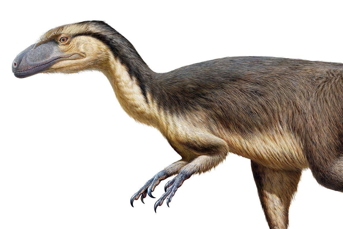 Fósseis de penas de dinossauros encontrados pela primeira vez perto do Polo Sul