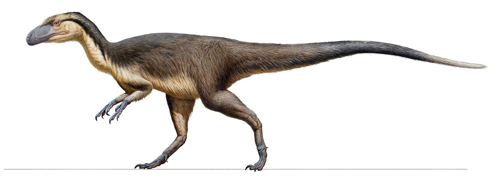 Uma área com penas fossilizadas encontrada na Austrália fornece evidências sólidas de que pequenos dinossauros carnívoros, ...