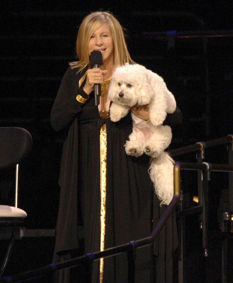 Barbara Streisand segura sua cachorra, Sammie. Quando Sammie morreu ano passado, a cantora e atriz fez dois clones dela.