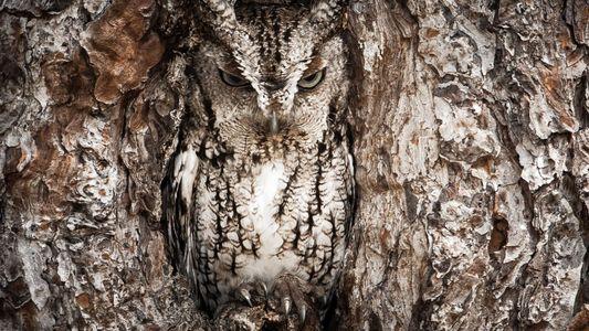 Você consegue encontrar o animal escondido nas fotos?