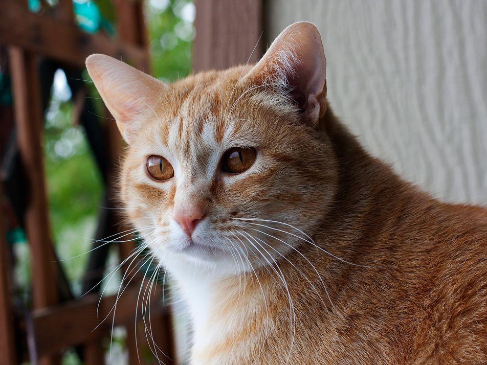 Gatos sabem o próprio nome — mas isso é ainda mais fácil para os cachorros