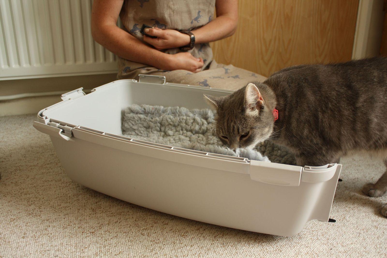 Você sabe como adestrar seu gato?
