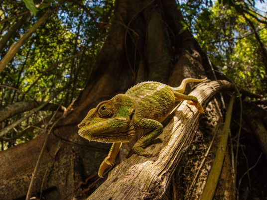 Nova pele 'inteligente' muda de cor usando truque aprendido com os camaleões