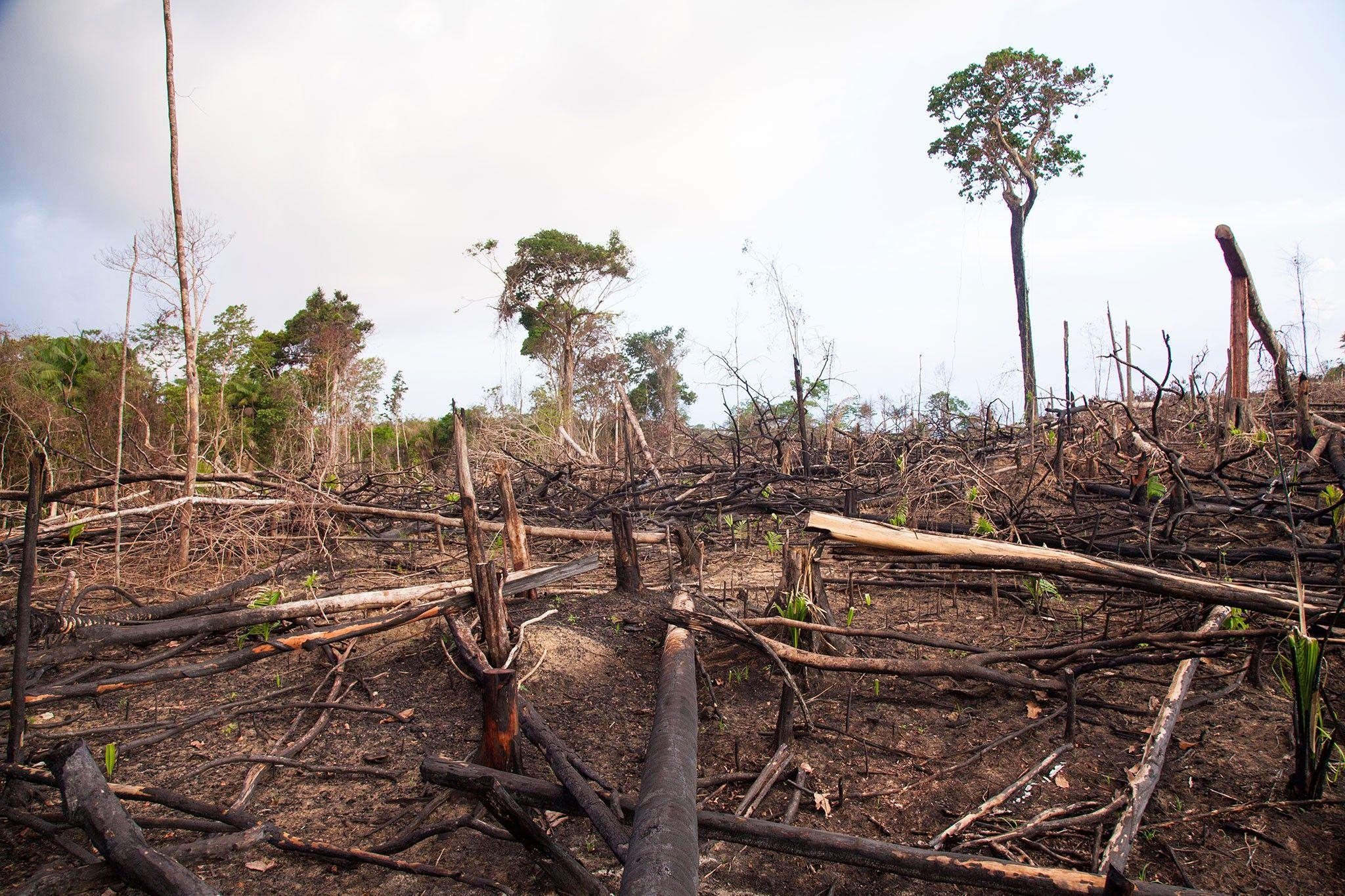 Desmatamento está causando aumento de doenças infecciosas em humanos | National Geographic