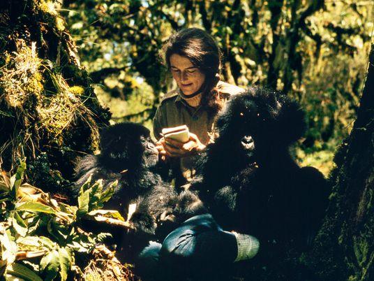 Dian Fossey: Mistérios de Uma Vida: O Gorila da Montanha