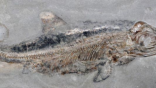 Fóssil de incrível 'monstro do mar' encontrado ainda com pele e gordura