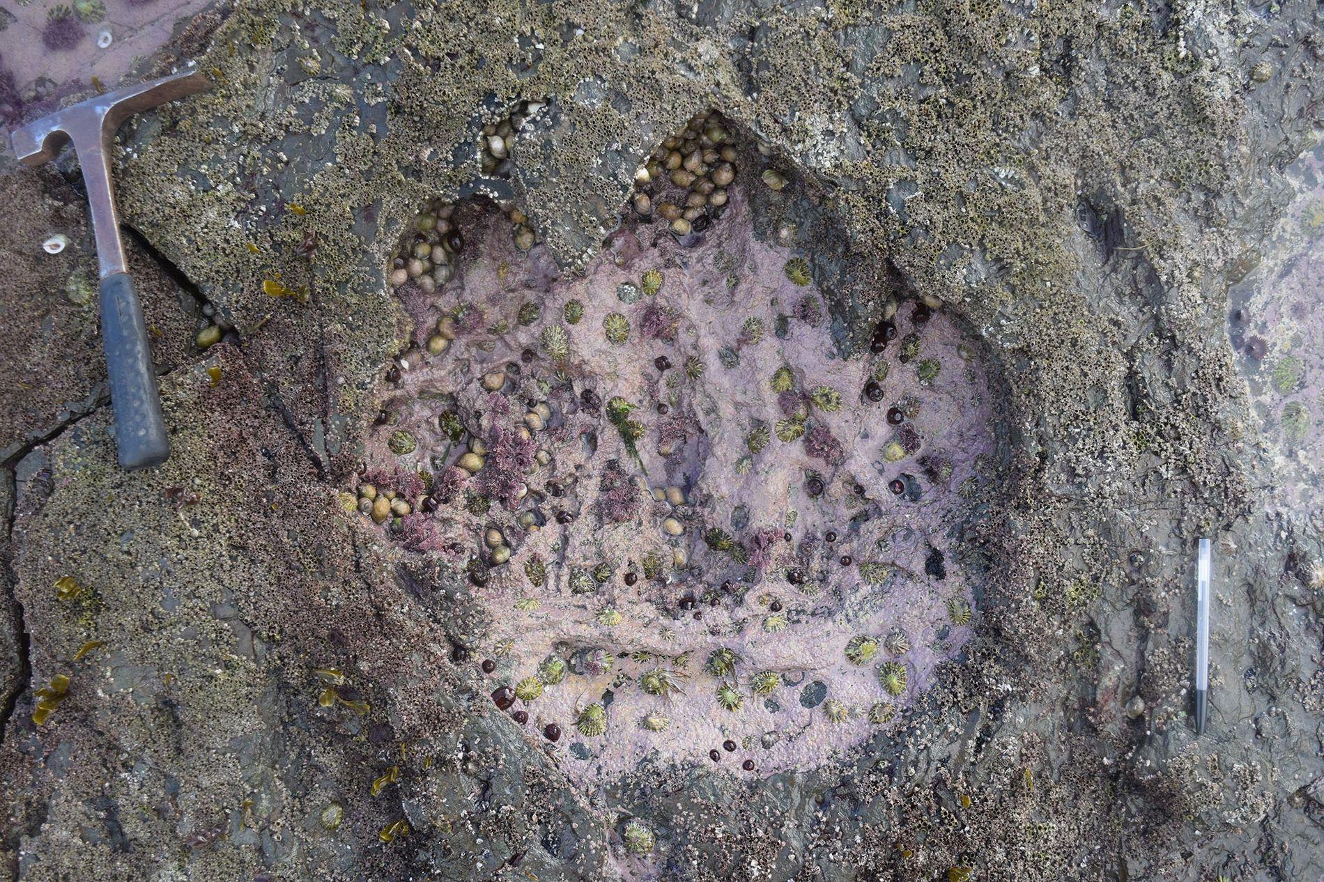 pegadas-dinosasuros-escocia