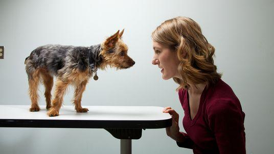 Cães de donos ansiosos também são ansiosos?