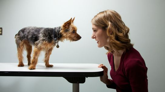 Pesquisadores estudaram as personalidades de 1.681 cães e seus donos. A conclusão: os cachorros e seus ...