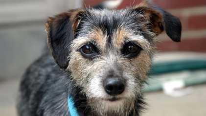 Cães podem alertar para exposição a substâncias tóxicas em casa