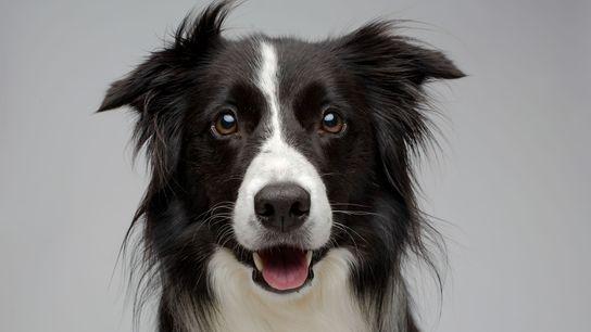 galeria-de-cachorros-domésticos