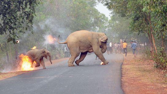 elefante-em-chamas-india