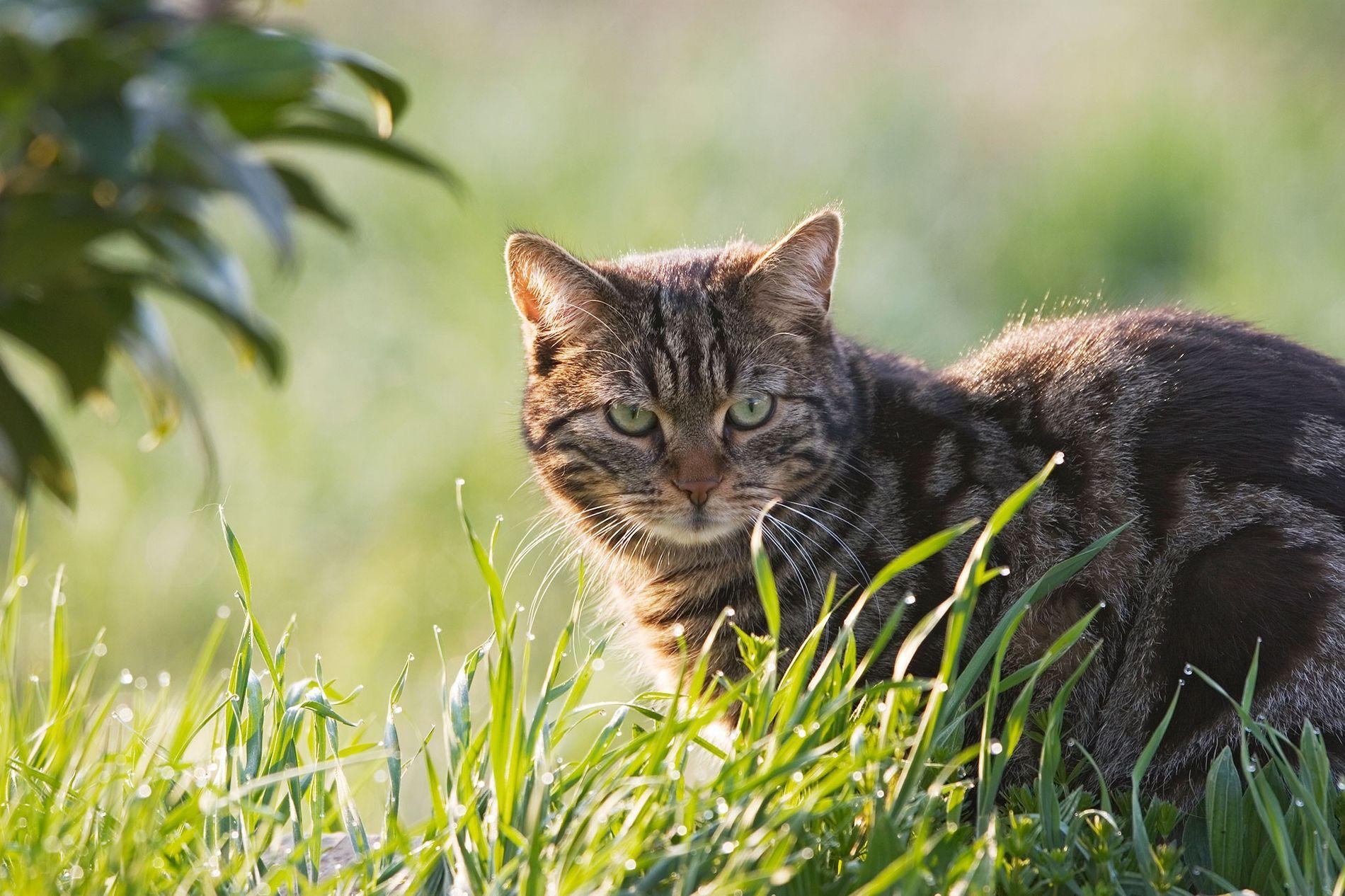 Eles podem parecer fofos, mas, de acordo com uma nova pesquisa, o instinto matador dos gatos ...