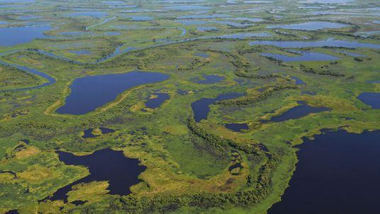 Pesca excessiva ameaça a sobrevivência do Pantanal e da Amazônia