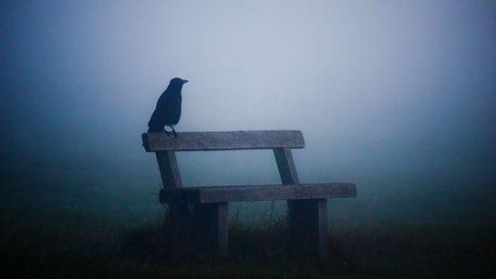 Corvo na névoa