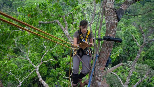 FOTOS: Mulheres que lutam pela conservação de espécies símbolos da fauna brasileira