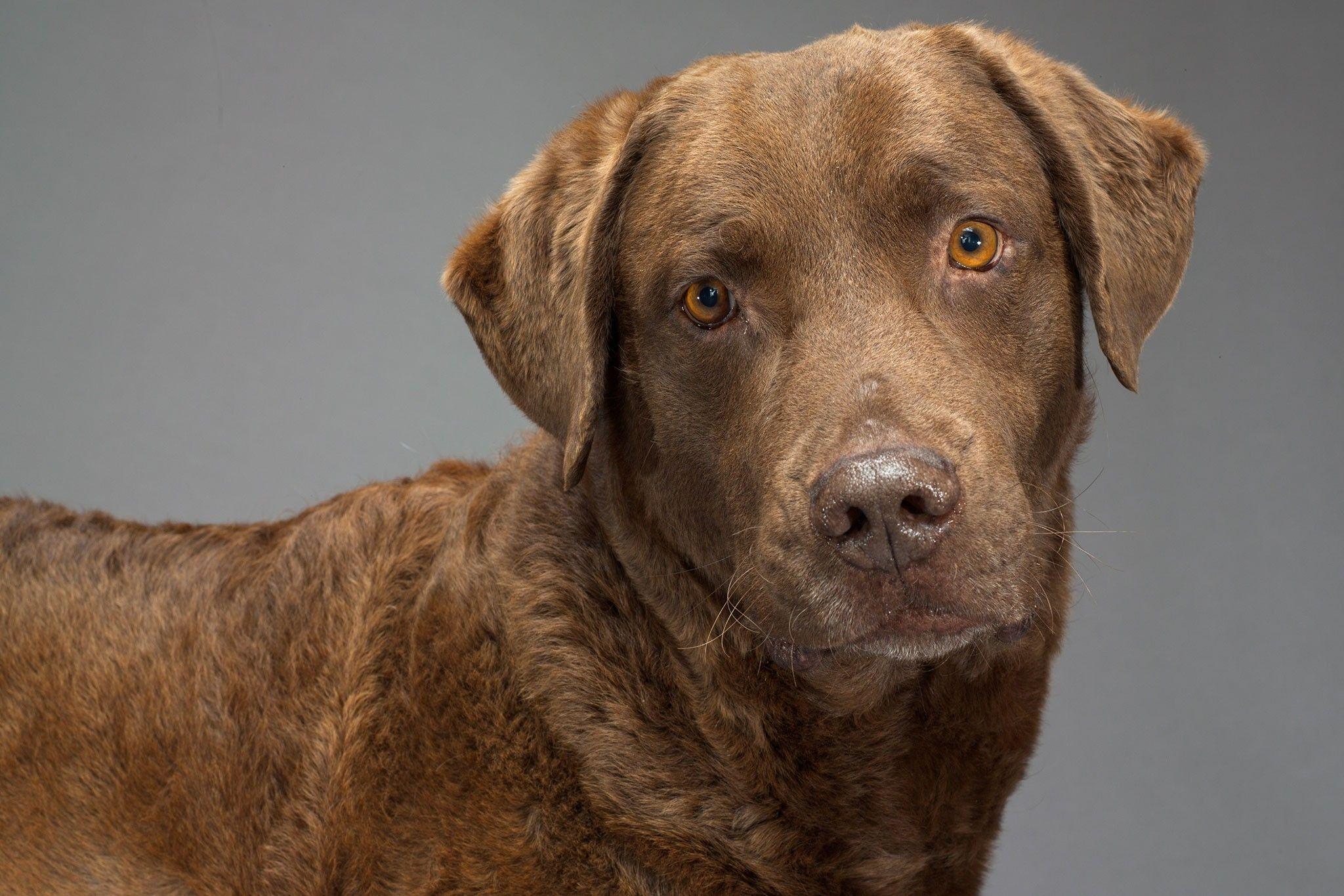 Séculos de reprodução seletiva remodelaram o cérebro dos cães domésticos | National Geographic