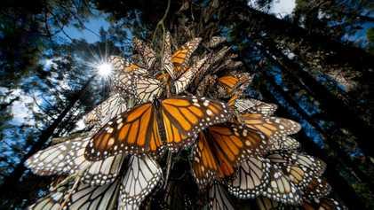 Populações de inseto estão despencando – saiba os motivos e a importância disso