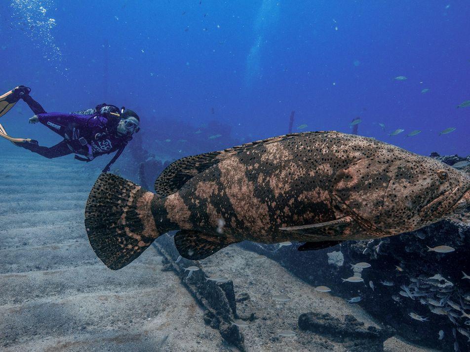 Para recuperar a paisagem marinha do Brasil, esta pesquisadora une ciência e saber popular