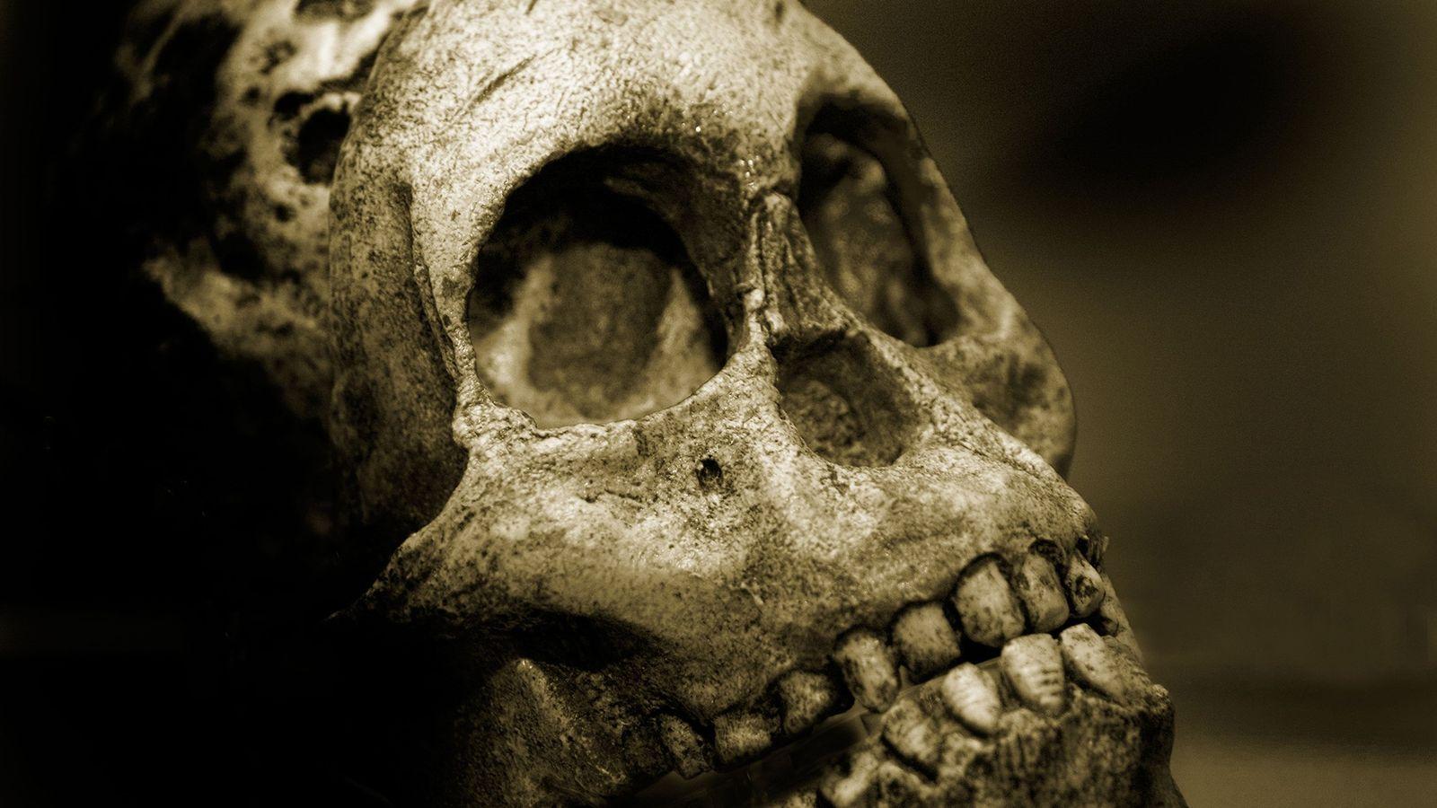 Em boa parte da história das diversas espécies humanas, o desgaste causado pela mastigação fez os ...