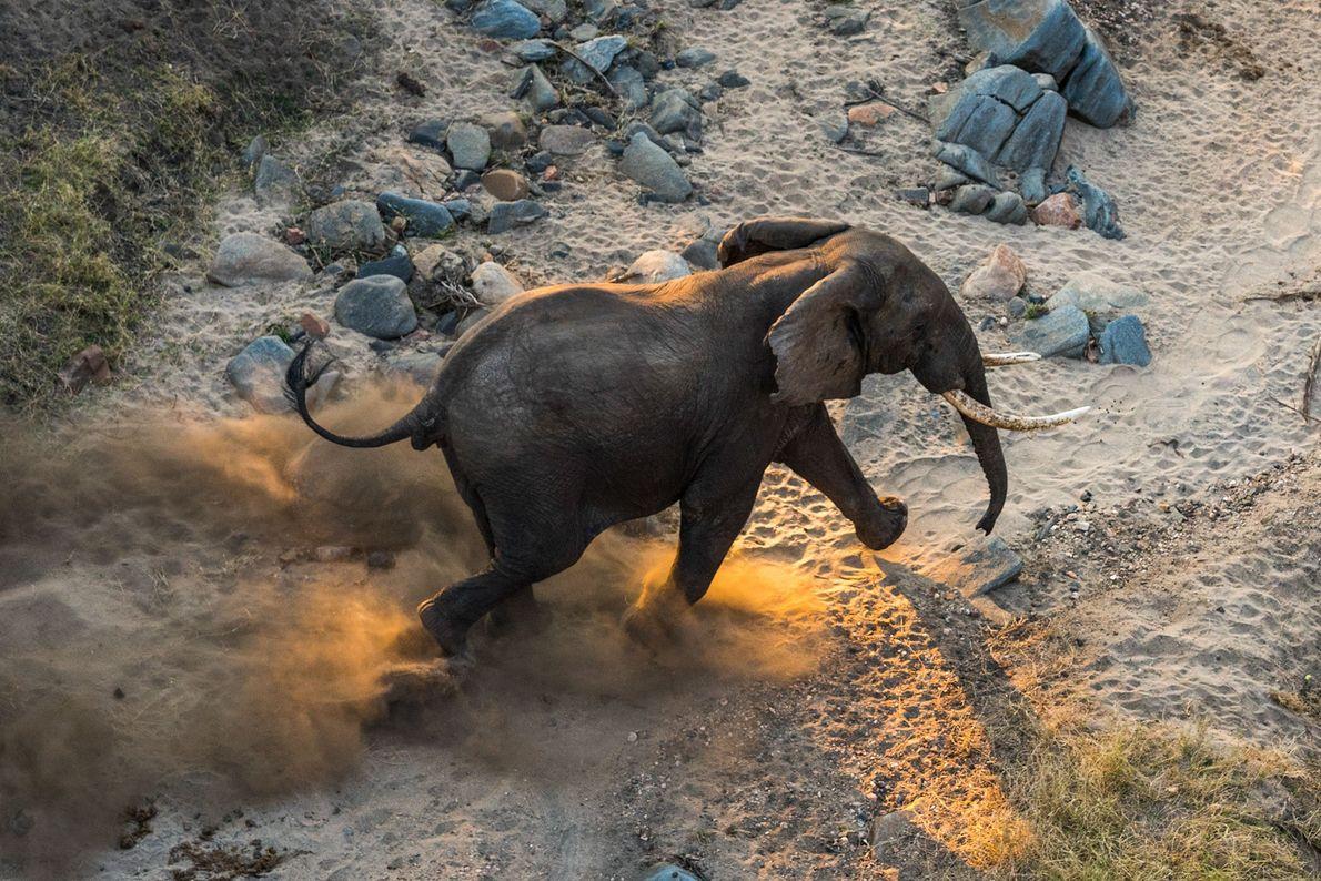 malaui-elefante-transporte