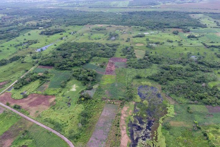 """Vista aérea de Aguada Fénix sem o LiDAR mostra como o monumento """"se esconde"""" em terras ..."""
