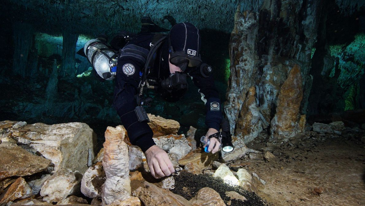 Um mergulhador recolhe o carvão das fogueiras que outrora iluminaram a caverna de La Mina, onde ...
