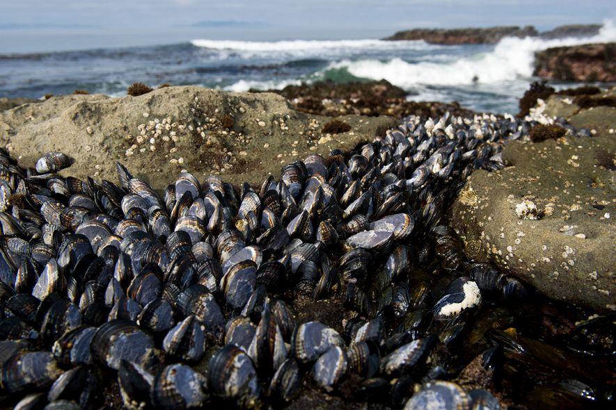 Raro e contagioso, câncer cruza o oceano, atinge espécies marinhas e deixa cientistas perplexos