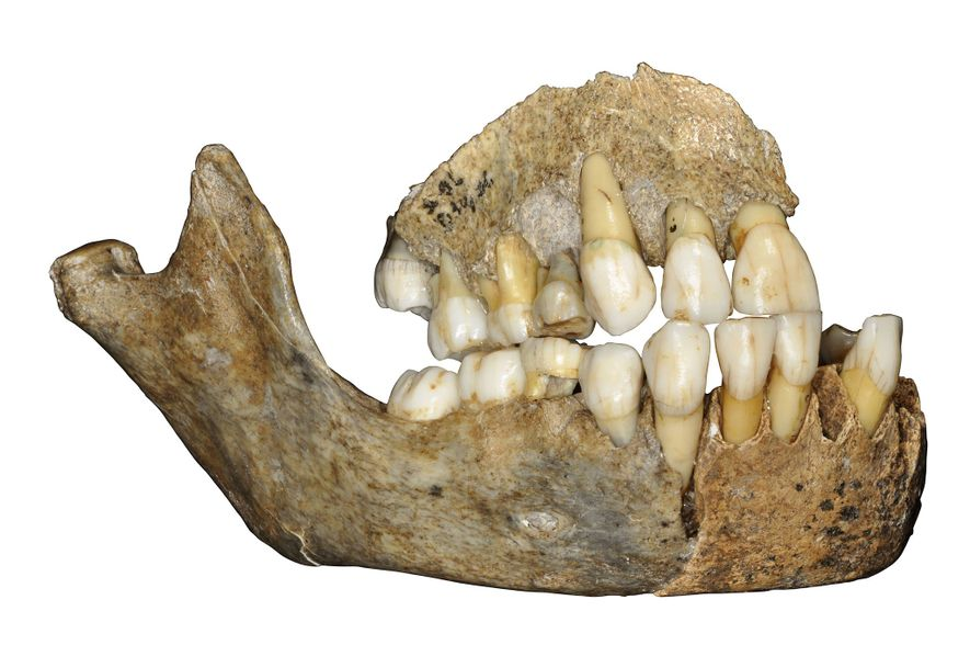 DNA antigo traz reviravoltas à história migratória dos neandertais
