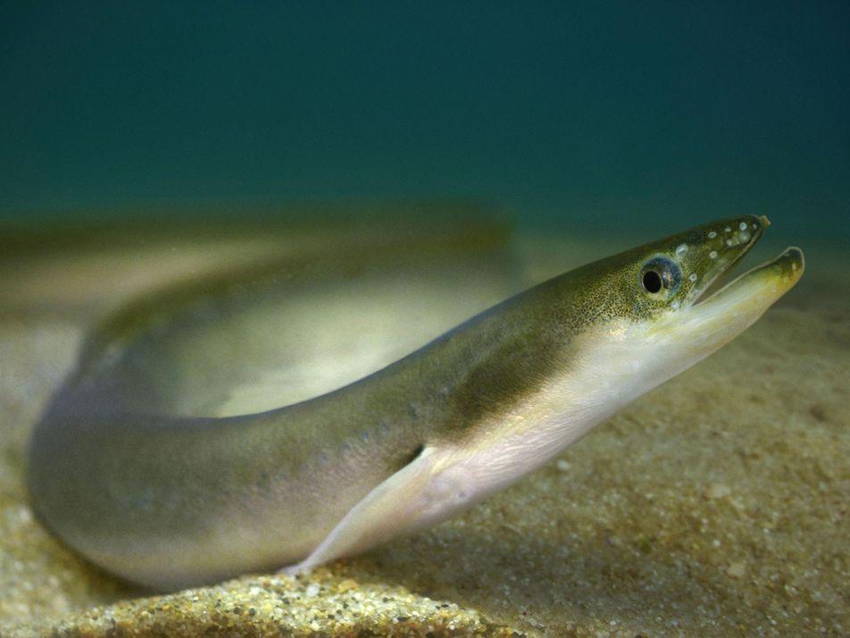 Como o inseticida mais popular do mundo levou os peixes de uma região ao colapso