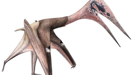 Novo pterossauro é um dos maiores animais que já voaram