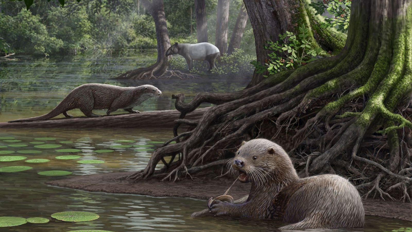 A lontra gigante Siamogale melilutra devorava presas aquáticas nos pântanos de onde é hoje o sudoeste ...