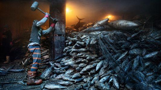 O mar está ficando sem peixe, apesar da promessa dos países de controlarem a situação