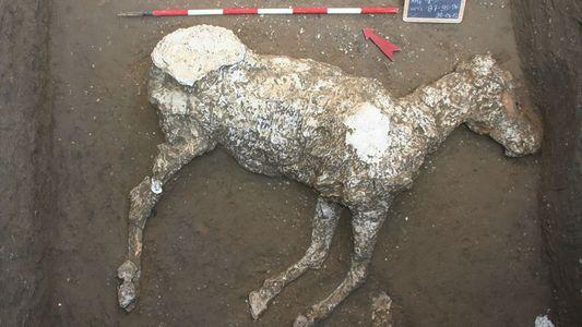 Cavalos encontrados em Pompeia podem ter sido usados para fugir de erupção do Vesúvio